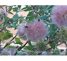Pale Pink Pleasure Photographic Print
