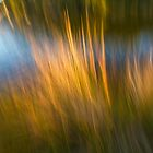 Reed Blur by pennyswork