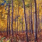 Golden Aspens, Colorado by Alex Cassels