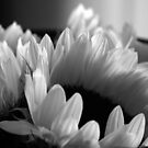 Sun Flower by Leslie Guinan