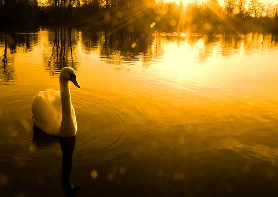 Magical Swan