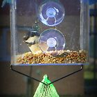 Coal Tit on Window Feeder by Michaela1991