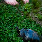 Turtle In My Yard II by abraxisdesign