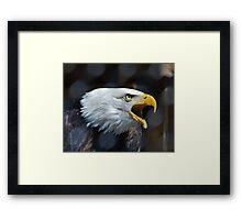 Screaming Bald Eagle Framed Print