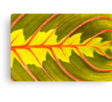 Prayer Plant (Maranta leuconeura) Canvas Print