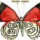 Diaethria Clymena (88 Butterfly) by Carol Kroll
