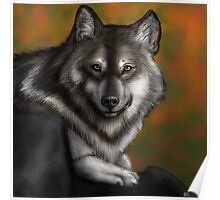 Timber Wolf - Autumnal  Poster
