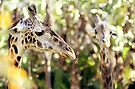 absrtact with two giraffes by Marianna Tankelevich
