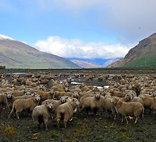 Wanaka . South Island, New Zealand. (3) by Ralph de Zilva