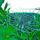 Early Morning Spider Web by Jacob Jones