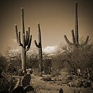Three Cactus by Aaron Bottjen