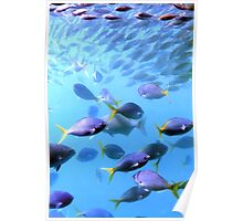 Fish of the Great Barrier Reef Poster