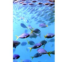 Fish of the Great Barrier Reef Photographic Print