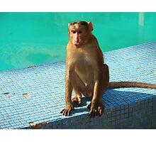 Monkey at pool  Photographic Print