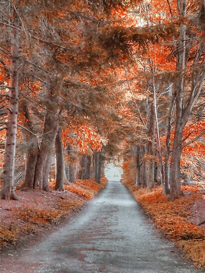 Autumn's Lane by Donnie Voelker