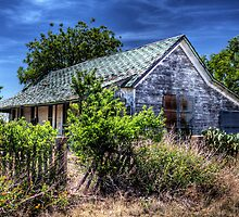 Ferocious vegetation at neglected dwelling by Timothy S Price