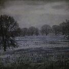 Desolate by Judi Taylor