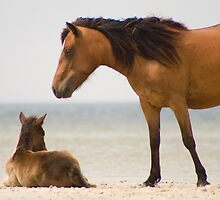 """Protector"" - wild horses on the beach of Cedar Island, NC by John Hartung"