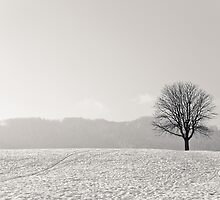 Lone Tree Hill 2 by Gary Steele