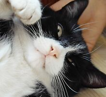 My name is Schnurz and I enjoy cuddles by karina5