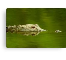 """Reflective Eyes"" - alligator in the Florida Everglades Canvas Print"
