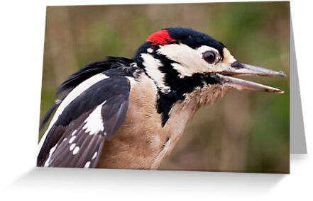 Woodpecker by Ray Clarke