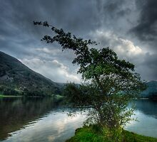 Ullswater Tree by Ann Garrett