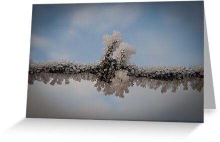 Frost Clinging To Barbed Wire by Tristan Hopkins