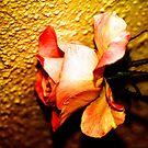 ROSE WITH TEXTURE by Esperanza Gallego