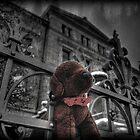 Puppy Love by Luke Griffin