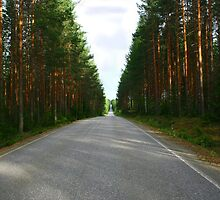 Finnish pine forest by tanmari