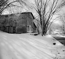 Shadows in the Snow by Jeanne Sheridan