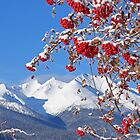 Snowy Mountain Ash by Ted Widen