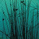 reeds by vampvamp