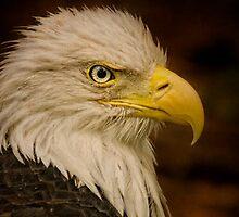 Giving You the Eagle Eye!! by TeresaB