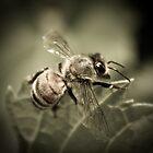 Bee Macro by Chris Harlan