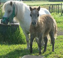 Mini Mare & Colt by louisegreen