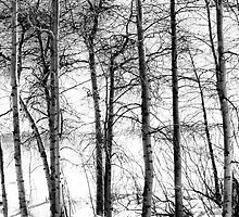 Tahoe in Monotone by Barbara  Brown