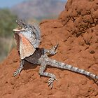 Frilled Lizard by Ken Griffiths
