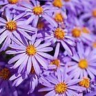 Sea of Purple by SusanAdey