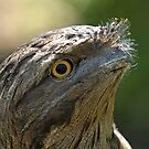 Tawny Frogmouth by SusanAdey