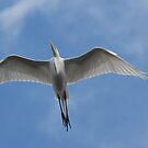 the beauty of flight by kathy s gillentine