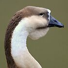 Chinese goose by DutchLumix