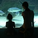 Wonder at the Aquarium by LynnEngland