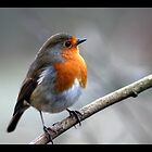 rocky robin 2 by Brett Watson Stand By Me  Ethiopia