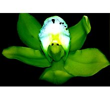 Kermie Baby: Alien Discovery: A New Perspective on Orchid Life Photographic Print