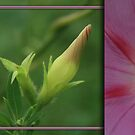 Morning Glory Diptych... South Africa, Free State by Qnita
