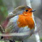 Robin Redbreast by Dean Messenger