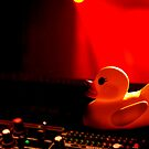 Duck on the decks by Brian Edwards
