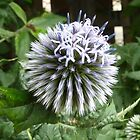 Globe Thistle by Cat-Artist